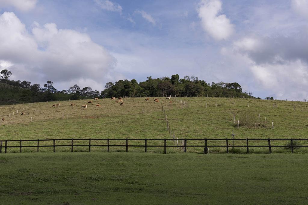 Manejo da Pastagem Ecológica