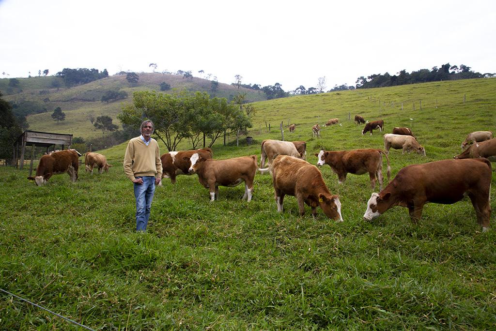 Resultado do Manejo de Pastagem Ecológica, em Piracaia (SP)
