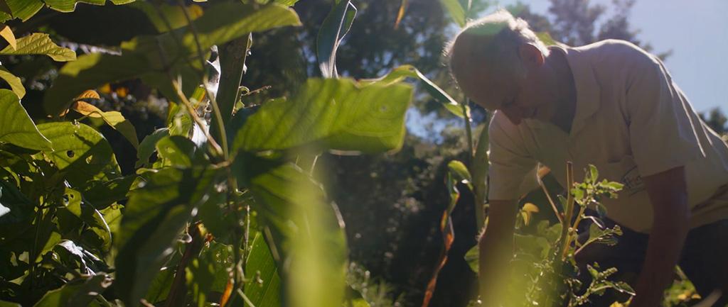 Produtor rural de Nazaré Paulista (SP) cuida de sua agrofloresta
